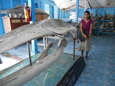 Whale Bone Museum at the Silliman University Marine Lab